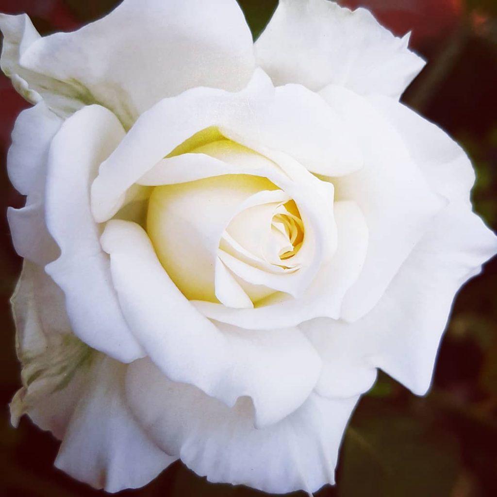 El color blancci